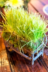 Wheat grass and moss in a small wooden bench.