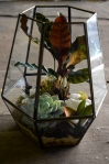Geometric terrarium of faceted brass with succulents, ferns and moss
