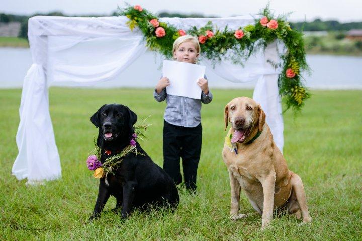 A Puppy Wedding